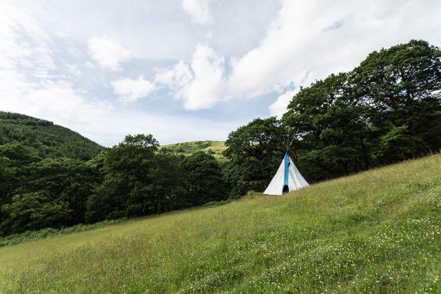 Tipi on hillside surrounded by wildflow meadow and woodland