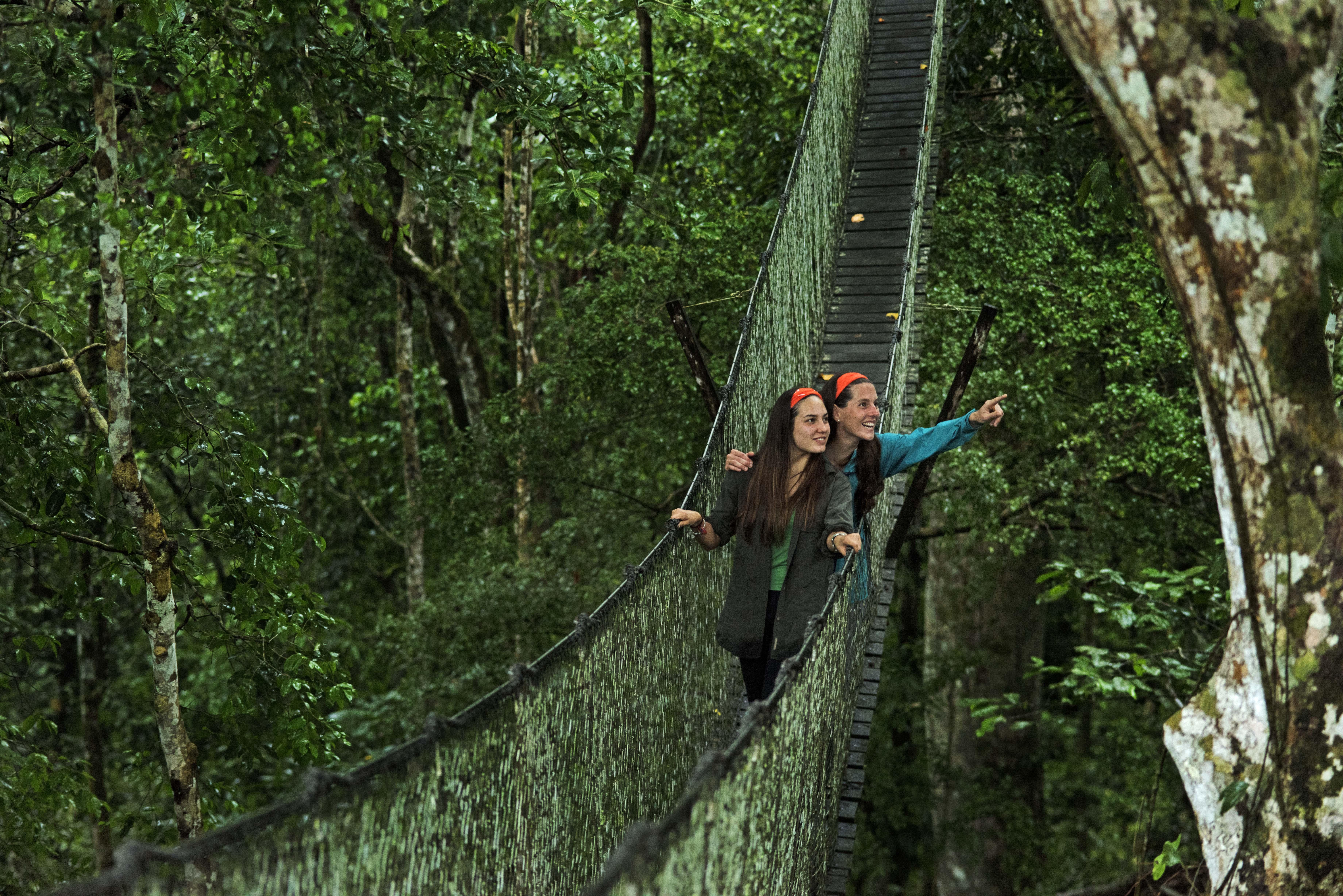 Couple on canopy walkway suspension bridge looking out to treetops